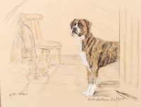 BOXER by Gill Evans at Ross's Auctions