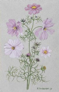 COSMOS by Cicely Anderson at Ross's Auctions
