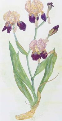 STILL LIFE, IRIS by Anne Anderson at Ross's Auctions