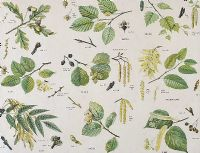 BOTANICAL STUDIES by Dorothy Fitchew at Ross's Auctions