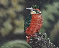 KINGFISHER by Chris Stephens at Ross's Auctions