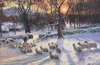 WINTER SHEEP by William Yeaman at Ross's Auctions