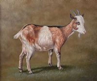 STUDY OF A GOAT by John C. Gray at Ross's Auctions