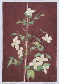 CLEMATIS, MONTANA by Marion Anderson at Ross's Auctions