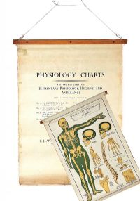 SET OF EIGHT PHYSIOLOGY CHARTS at Ross's Auctions