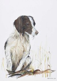 GUN DOG by M.P. Stevenson at Ross's Auctions