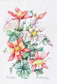 AQUILEGIA by E.M. Stevenson at Ross's Auctions