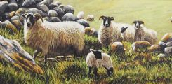 SHEEP BY THE DRY STONE WALL by Keith Glasgow at Ross's Auctions