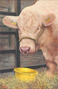 THE SHOW BULL by Keith Glasgow at Ross's Auctions